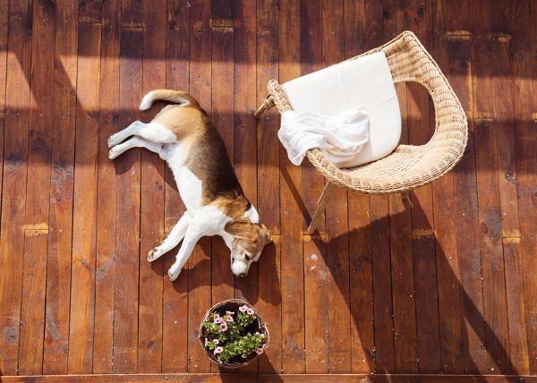 Beneficios del aire acondicionado en tus mascotas